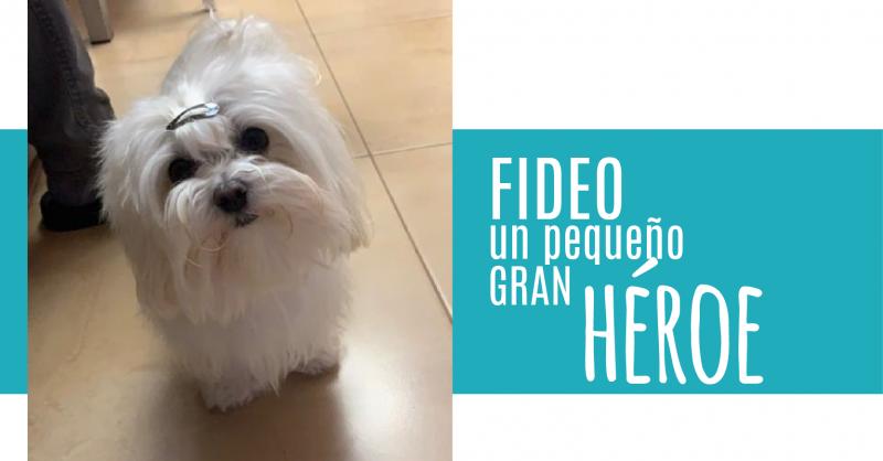 La gran historia de Fideo, un pequeño gran héroe