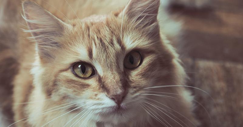 5 razones por las que deberías esterilizar a tu gatit@