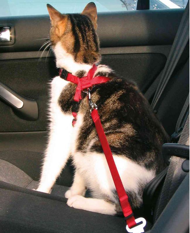 Arnés y cinturón seguridad gatos