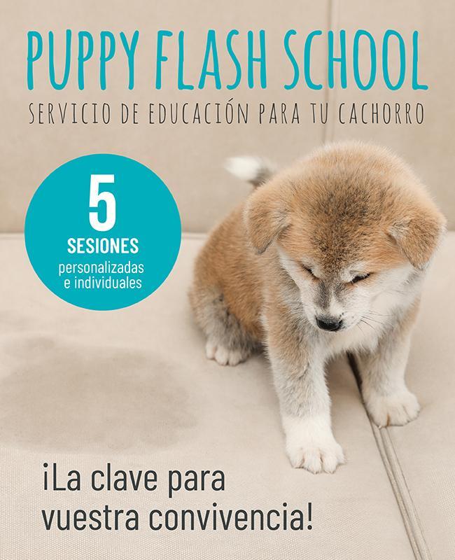Puppy Flash School - Servicio de educación para tu cachorro
