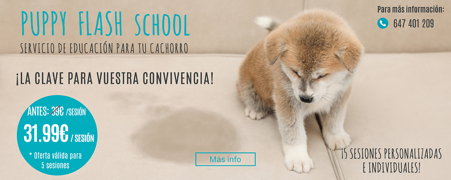 Servicio Puppy Flash School