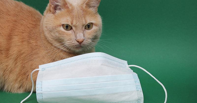 La realidad sobre el caso del gato con coronavirus